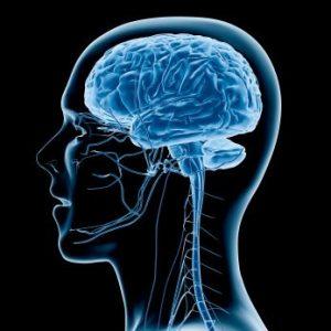 Neuroplastizität- Gehirn